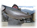 trophy gerrard rainbow trout from kootenay lake